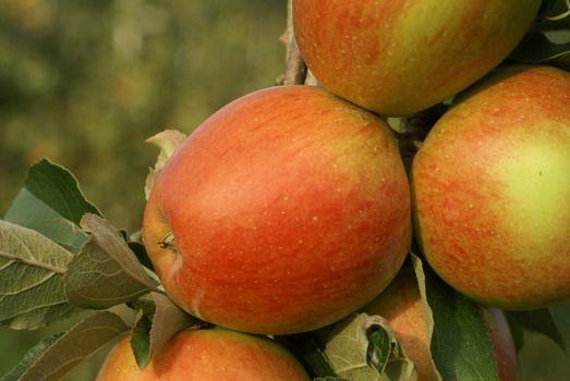 Maigold Apfel